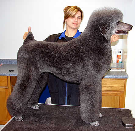 Professional dog and cat grooming in North Liberty, Iowa